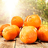 cruz box fresh juicing oranges 100