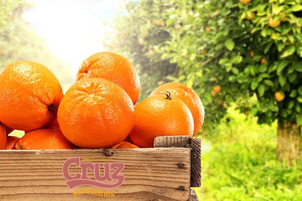 Cruz ingredients citrus juicing oranges